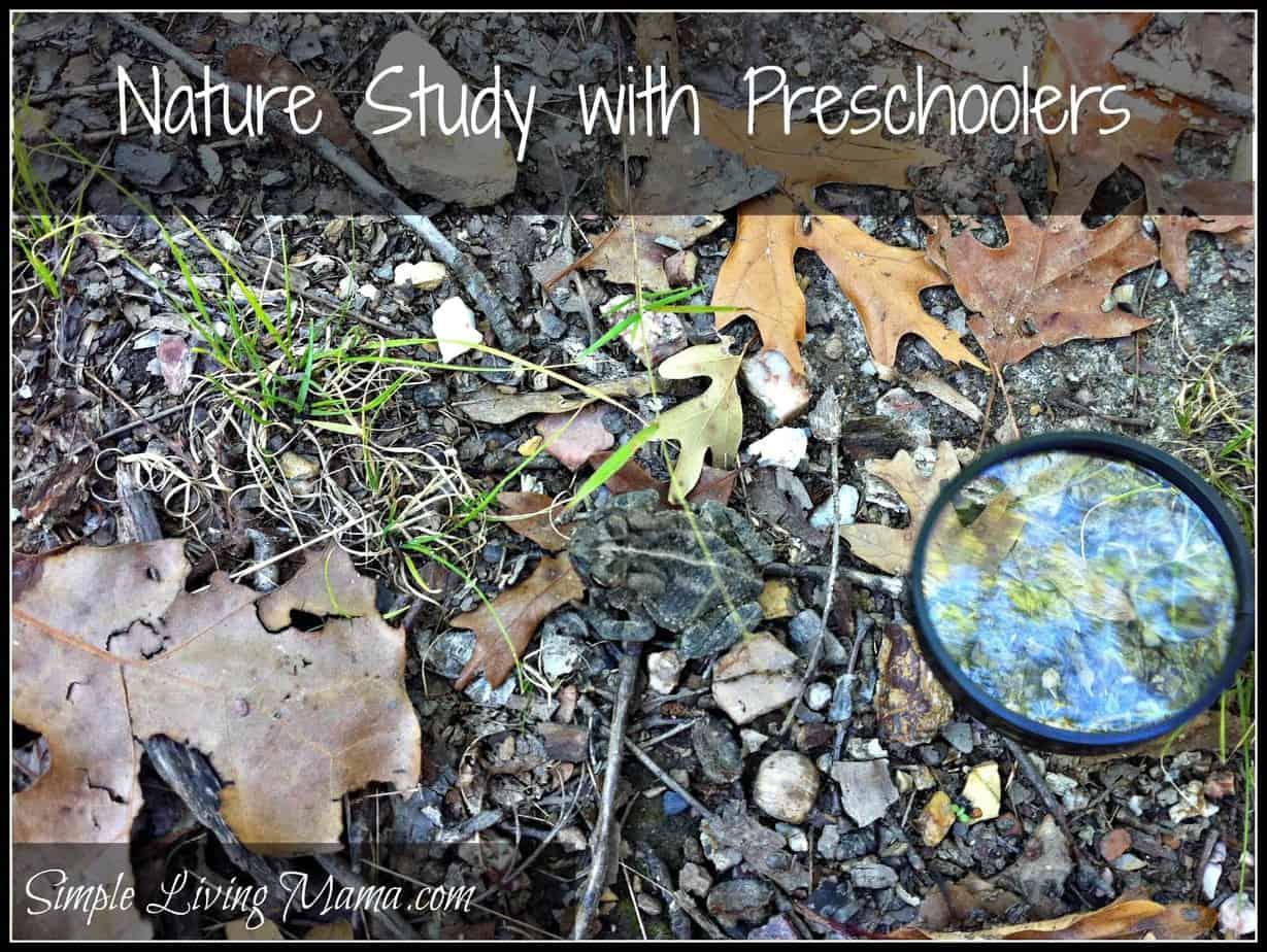 nature study 3