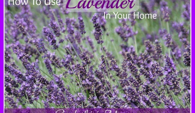 How To Use Lavender In Your Home