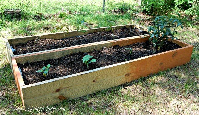 Adventures in Gardening in Raised Beds