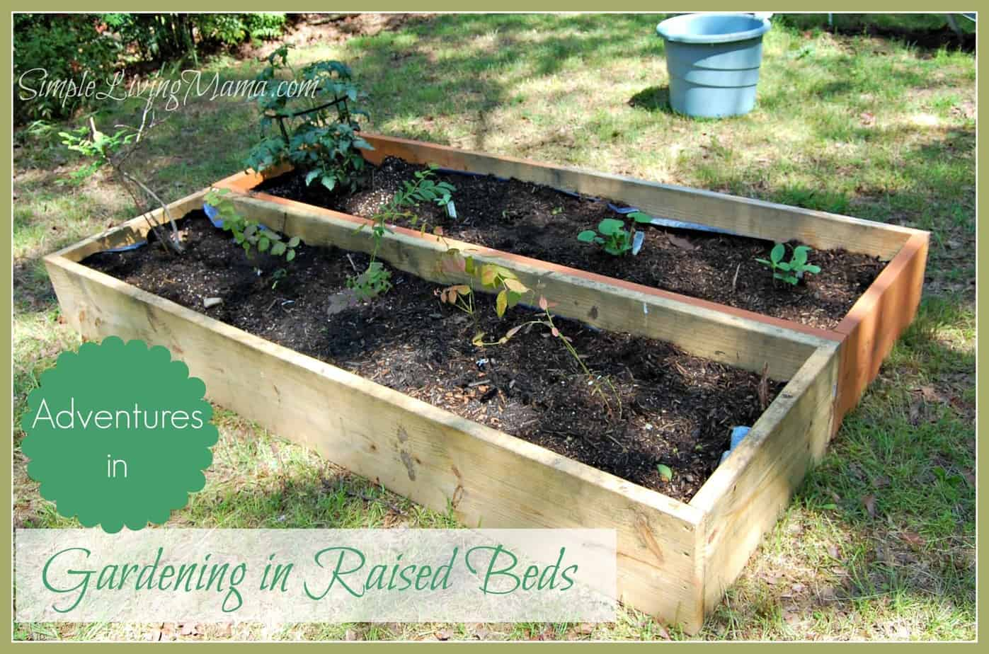 Gardening In Raised Beds