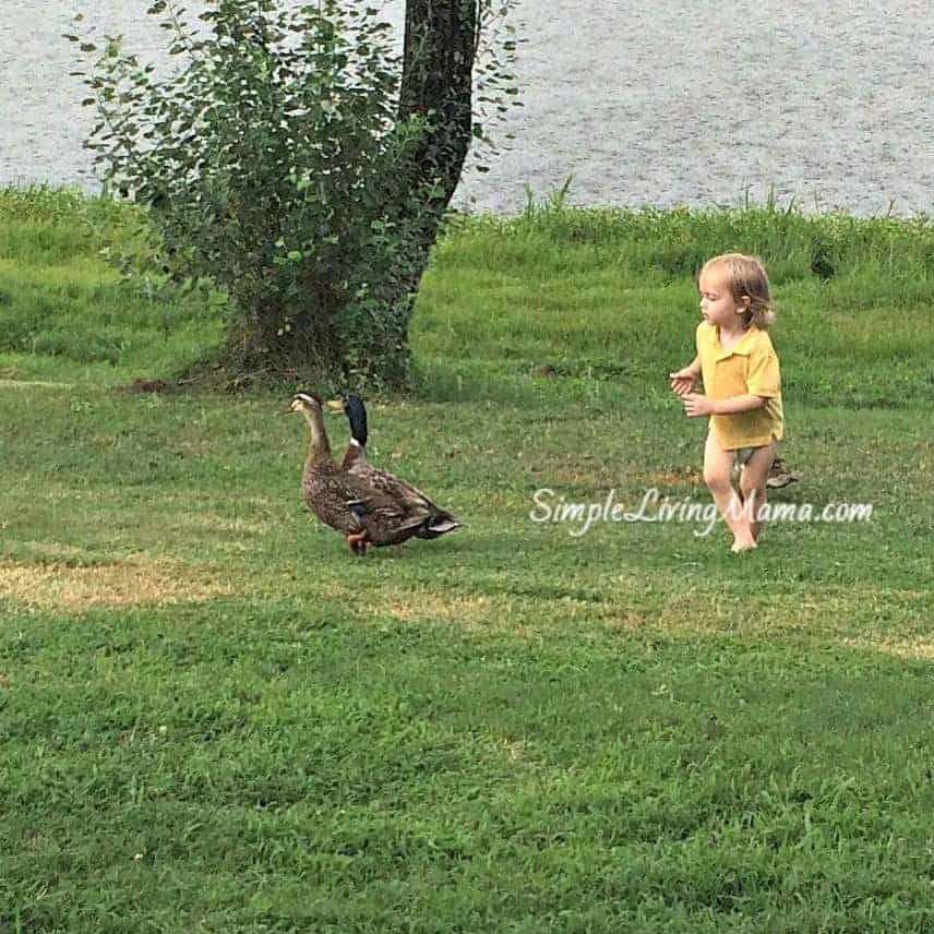 playing-with-ducks