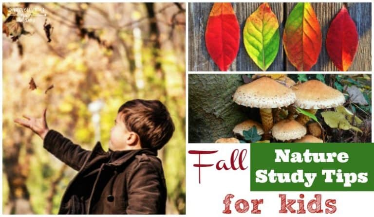 Fall Nature Study for Kids – Tips and Ideas