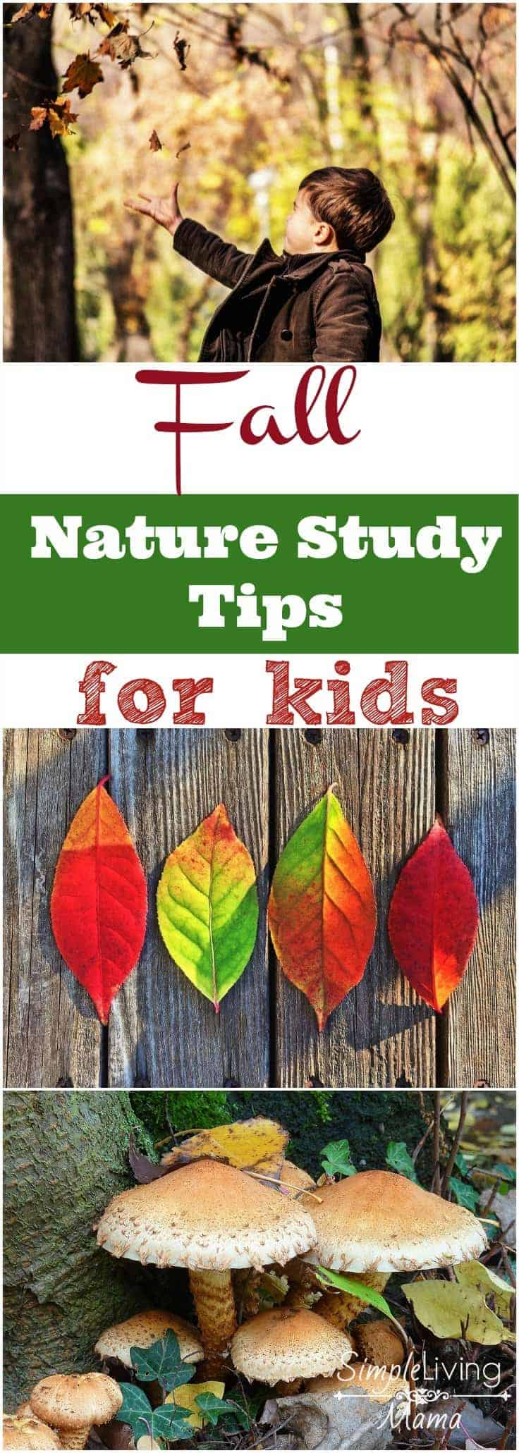 Fall is the perfect time to begin nature study with your kids. This is the perfect guide for fall nature study tips for kids. Get outside and explore!