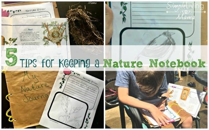 5 Tips for Keeping a Nature Notebook for Kids