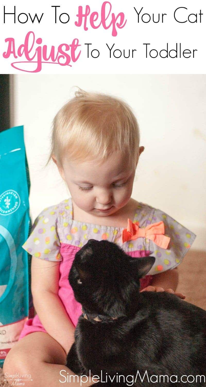 Learn how to help your cat adjust to your toddler with these five simple tips!