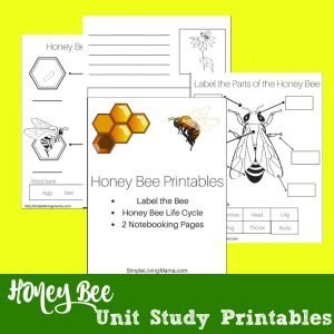 honeybee unit study printables