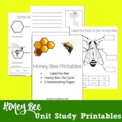 Science Unit Study Printables
