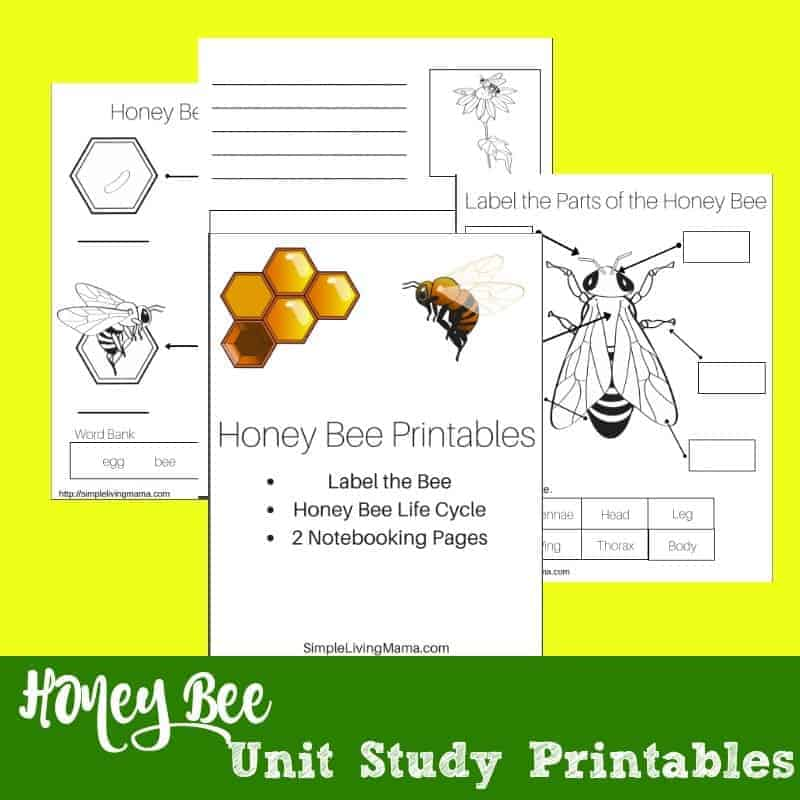 This is an image of Exceptional Honey Bee Printables