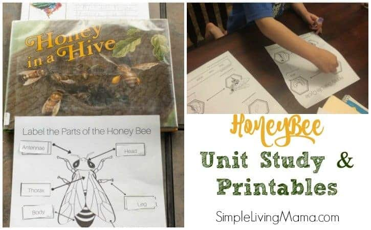 Honey Bee Unit Study + Printables