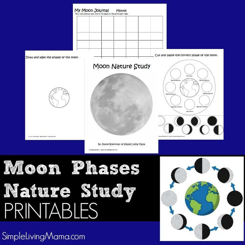 image relating to Printable Moon Phases named Moon Stages Gadget Examine Printable Pack