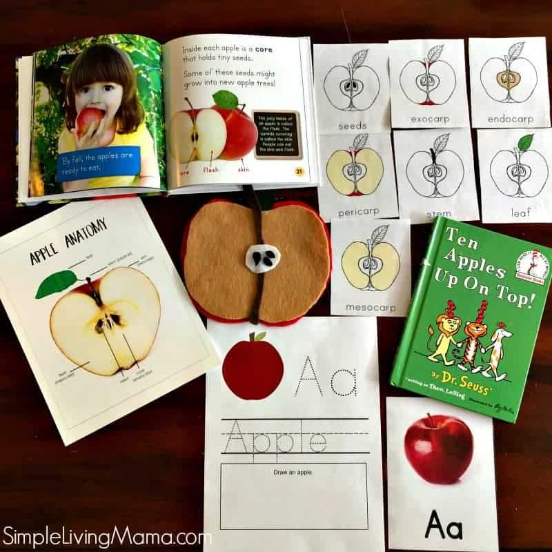 Learn the parts of the apple