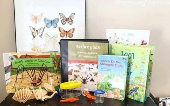 Insect Unit Study Resources – The Good and the Beautiful Arthropods