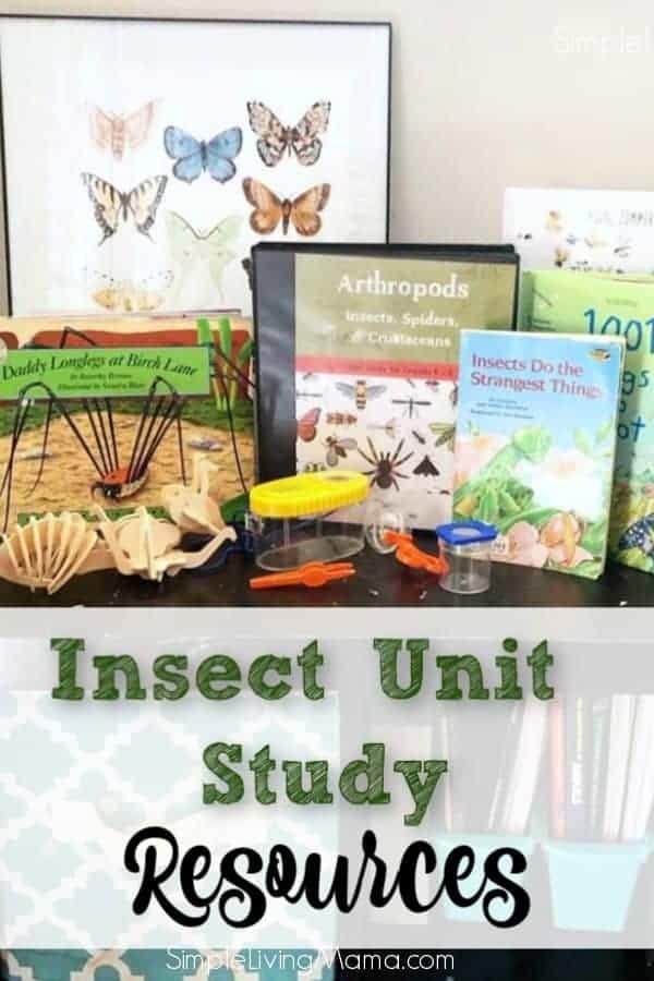 Arachnid Unit Study Insect Unit Stu...