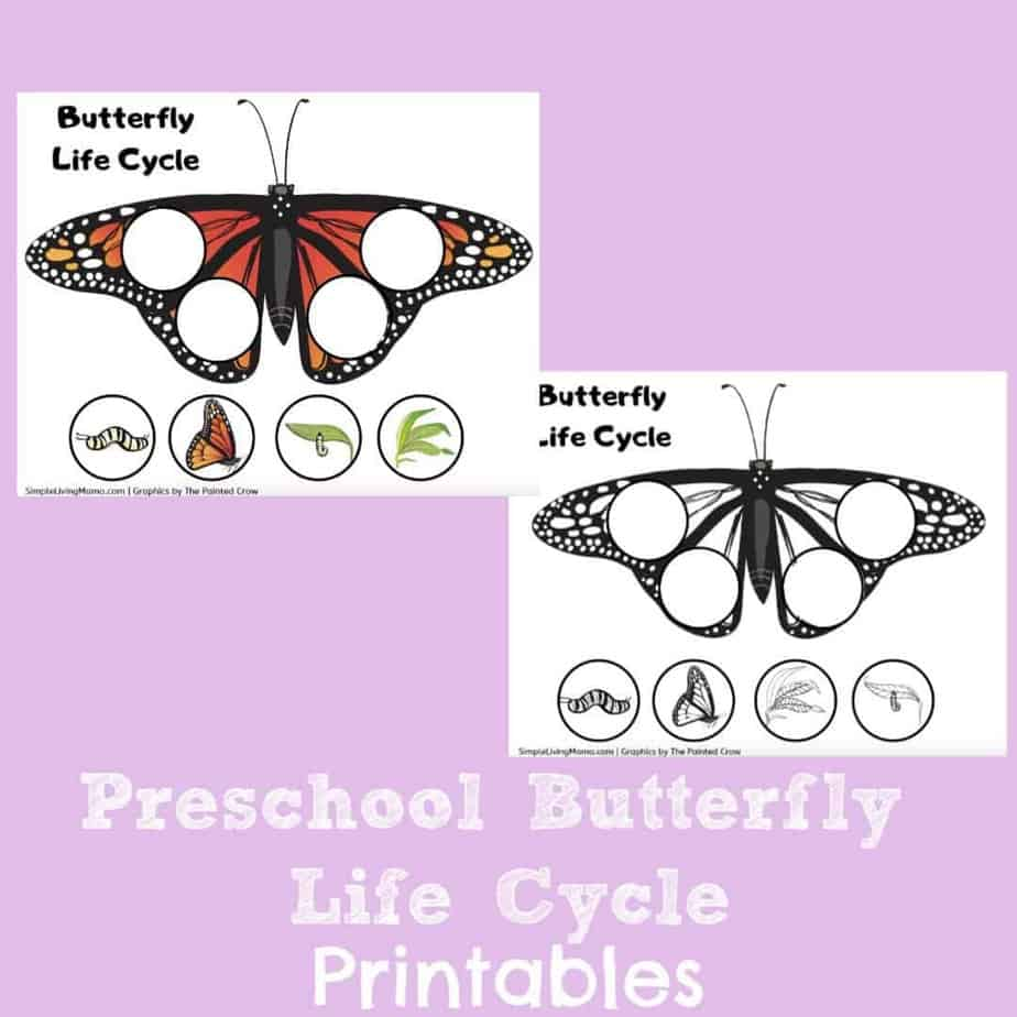 image about Butterfly Life Cycle Printable identified as Preschool Butterfly Lifestyle Cycle Printables
