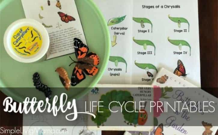 Life Cycle of a Butterfly Printables and Activities
