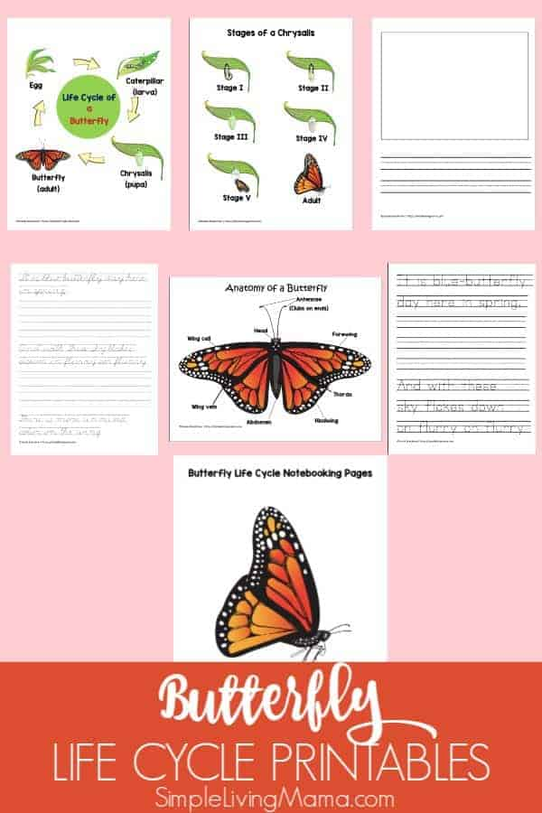 These butterfly life cycle printables include notebooking pages, copywork, and the stages of the butterfly life cycle and chrysalis to accompany any butterfly study!