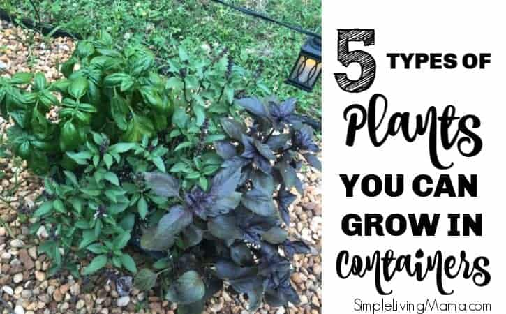 5 Types of Plants You Can Grow in Containers for Your Patio