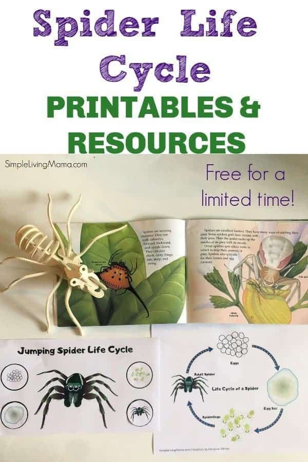 These spider life cycle printables are perfect for preschool and older kids!