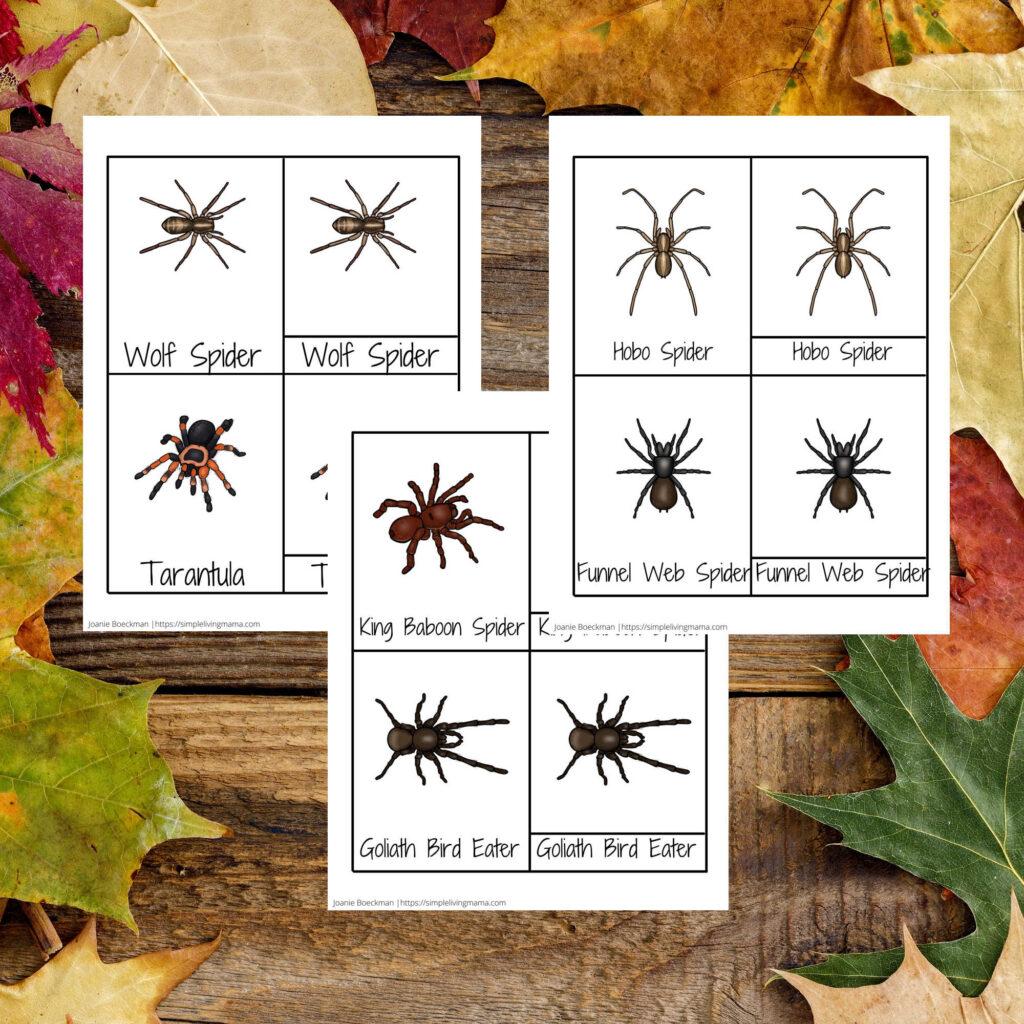 Spider three part cards