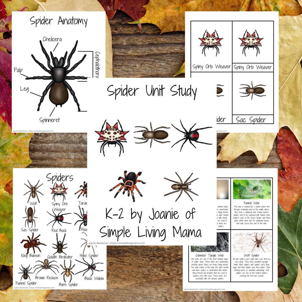 Spider Unit Study Printables