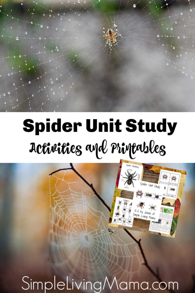 Spider unit study printables and activities